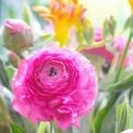 Inspiration No. 47: Schlimme Strickfails, Stricken mit 108 Jahren und warum wir das Stricken so lieben