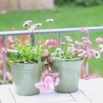 Neues vom Balkongarten: Die Pflanzen sind da!